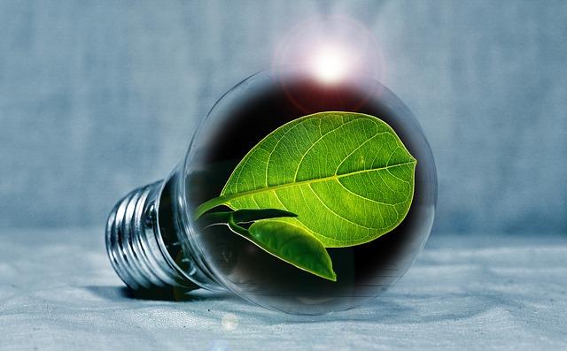 電球の中の葉